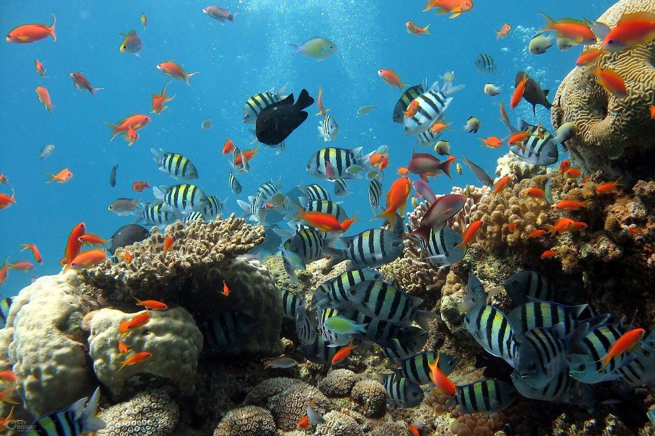 Filtrowanie wody w akwarium – walka z zanieczyszczeniami