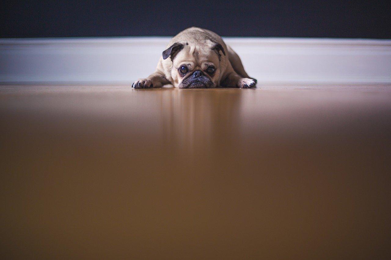 Czy ekologiczna karma dla psa to dobre wyjście?